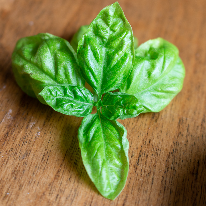 Close up shot of Fresh Italian Basil.