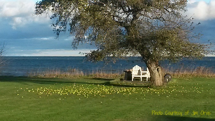 Beautiful lake side shot with apple tree with at least a million apples on the ground. Well maybe we are exaggerating but it is a lot of apples.