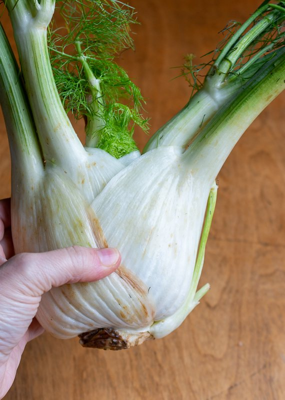 Whole fennel bulb being held in one hand.