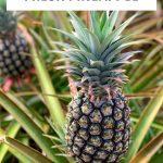 Learn hot to cut a fresh pineapple.